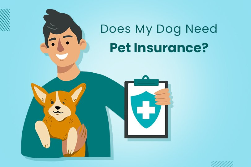 Understanding Pet Insurance: A Complete Guide for Dog Parents